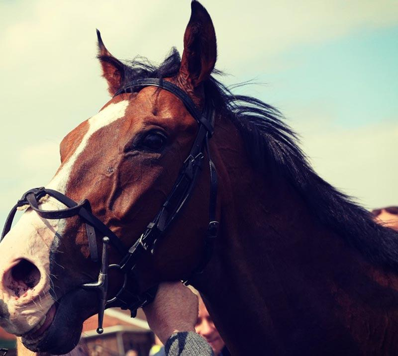 The races uttoxeter betting betting affiliate site for sale